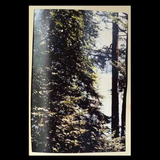 Au Coeur frais de la forêt